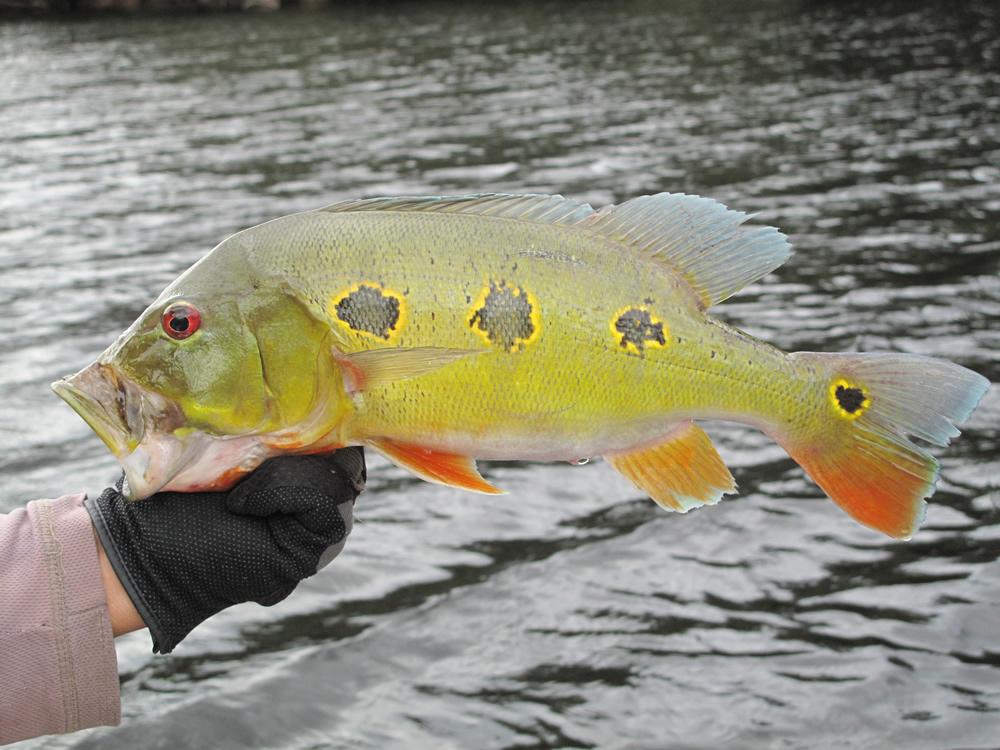 Amazon River Species